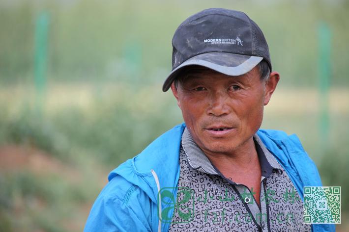 老王:种植经验丰富本村土专家