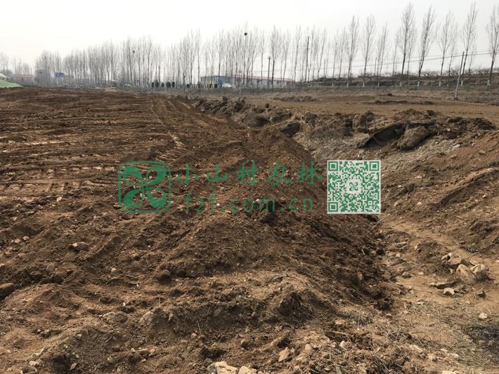 要想在石子遍地、高低不平的土地耕种,需要反复推平并人工拣出石子。
