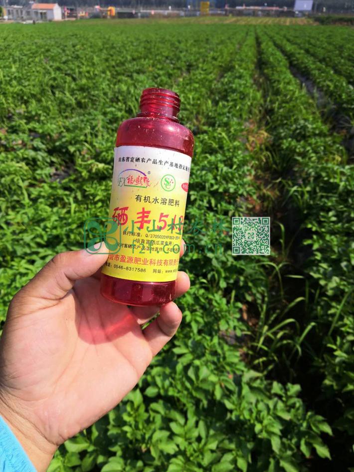无毒无害的富硒液体肥料,不下雨的话,1:60兑水后每周一次,下午3点以后喷施连续6-7次。
