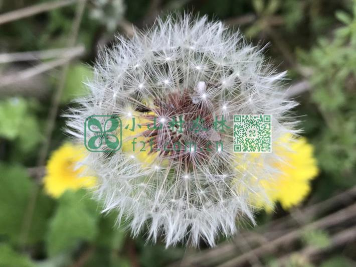 田埂上蒲公英和苦菜花开花谢,荆枝花团团锦簇,没人顾得上观赏,任由它们独自和蜜蜂蝴蝶交流。