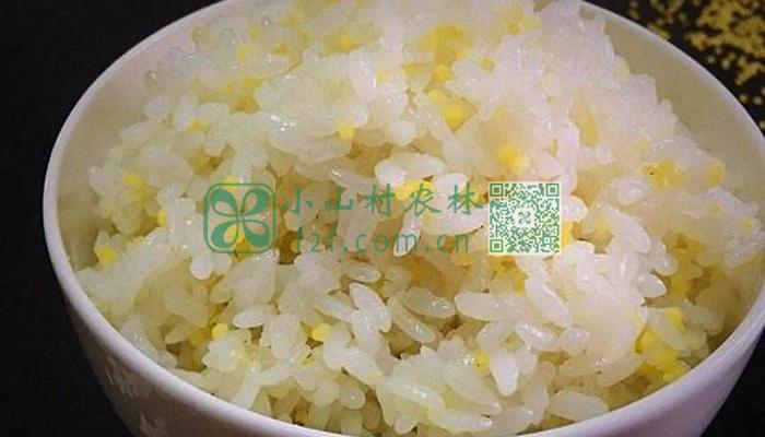 小米大米饭图片