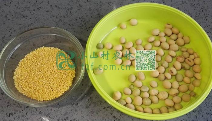 黄豆小米图片
