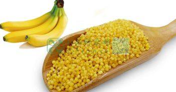 香蕉小米图片