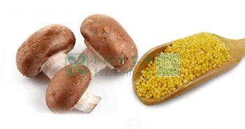 小米蘑菇图片