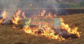 秸秆焚烧图片