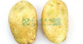发绿土豆图片