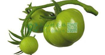 青西红柿图片