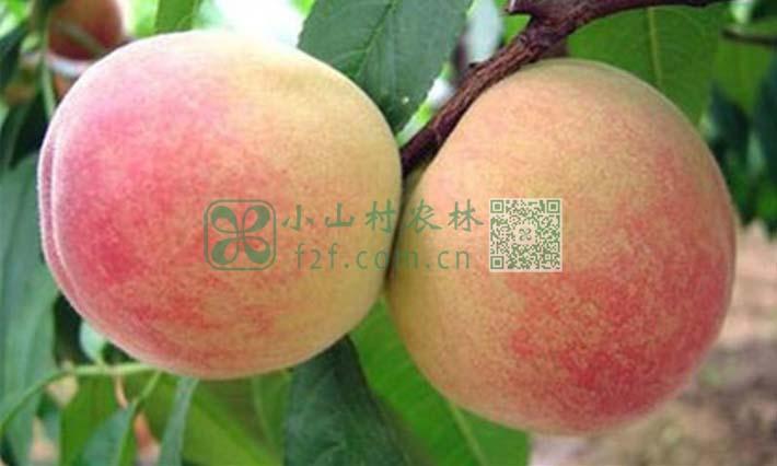 孕妇吃水蜜桃有哪些注意事项图片