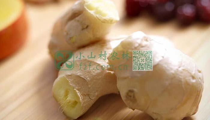 生姜发芽还能吃吗图片