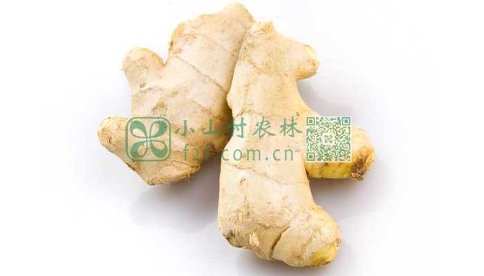 生姜食谱推荐图片
